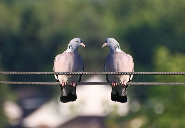 Uchroń swój dom przed wizytą dzikich ptaków