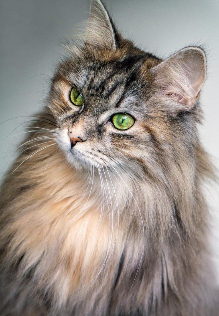 Solidne informacje, jeśli chcesz naprawdę zrozumieć koty